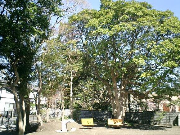 04)鎌倉市「材木座たぶの木公園」